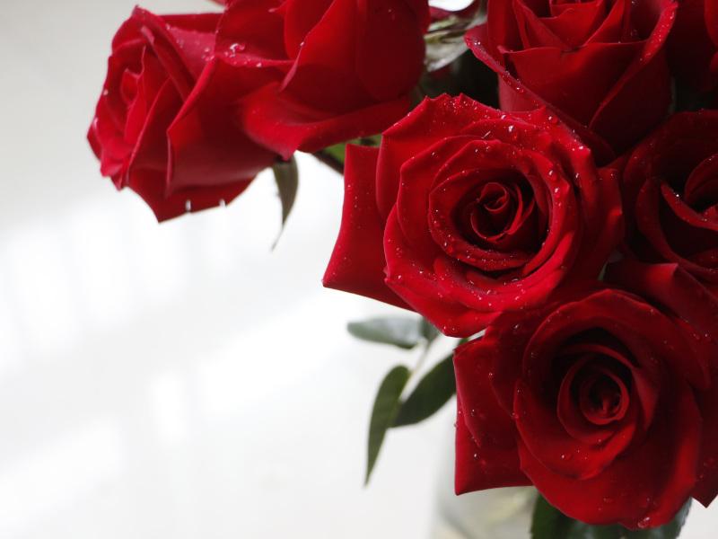 Rose 2096914